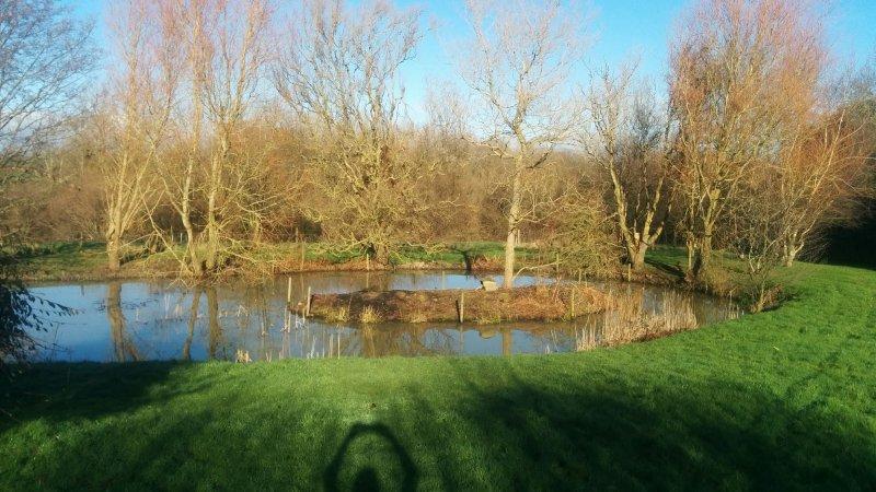 Belo jardim e lagoa