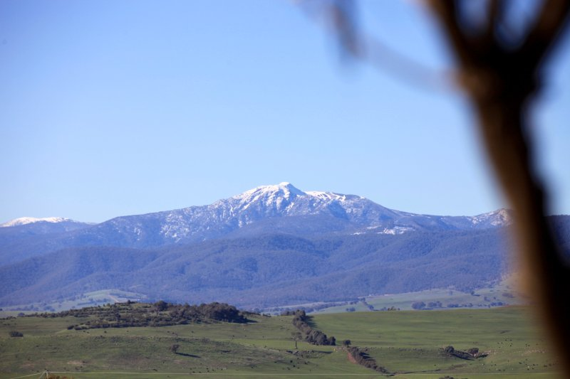 View of Mt Buller from our front door