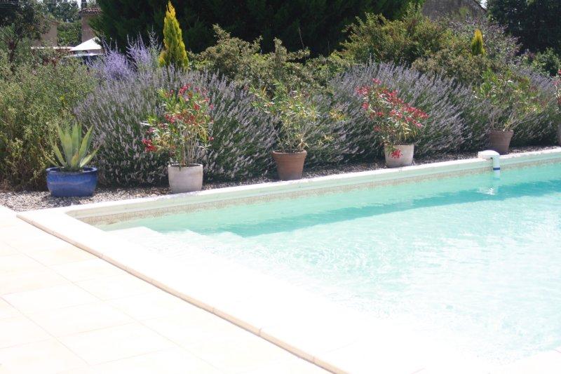 Vista piscina e di frontiera di lavanda