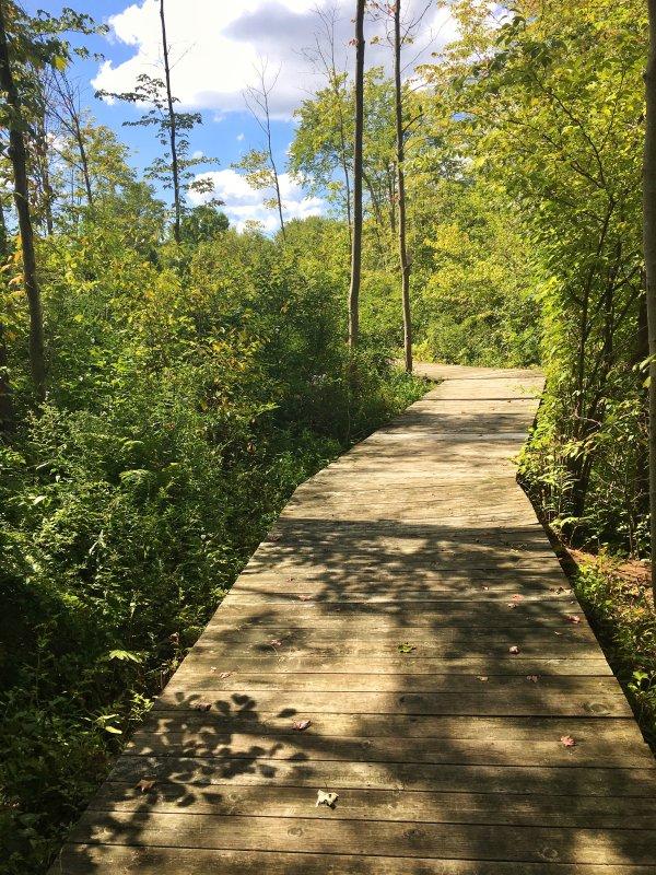 Boardwalk a lago