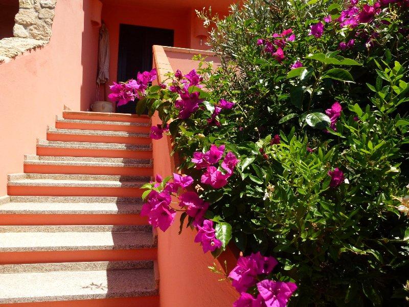 Buganvillas y jazmines fragantes traer el apartamento / Un toque de color hasta el apartamento