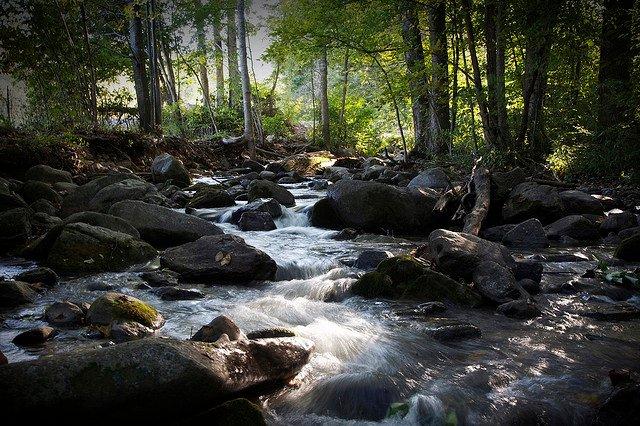 Creek - Payer pour les poissons pendant la saison de la truite