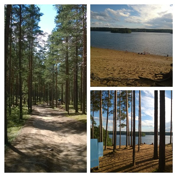 Beach and forest near by.