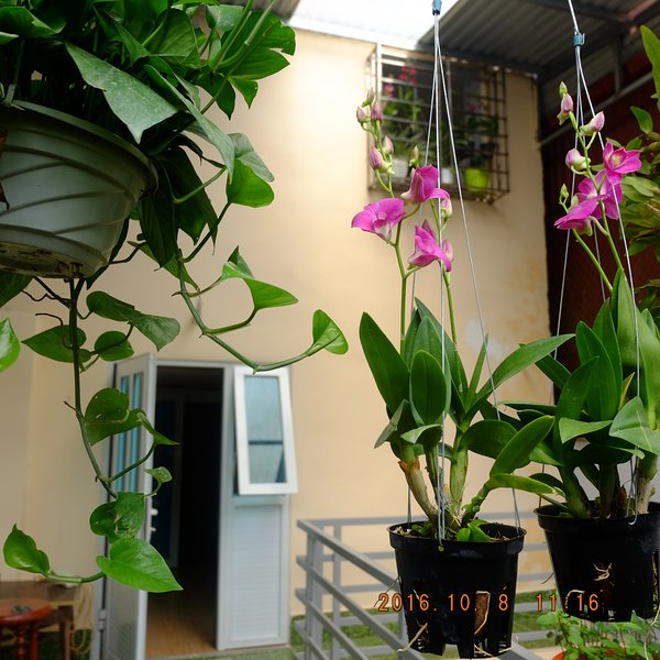 Homestay Muong Thanh, vacation rental in Dien Bien Phu