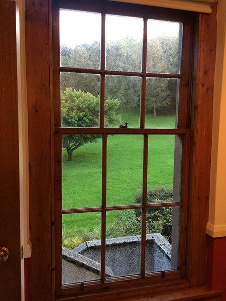 janela da cozinha com árvore de maçã fora. Desculpe, mas não há maçãs!