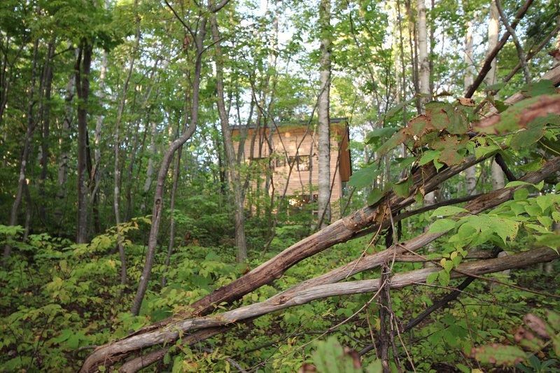 A estrenar, luminoso y confortable cabaña de un dormitorio en el bosque.