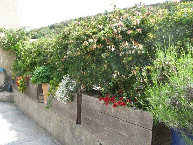 planters along the terrace