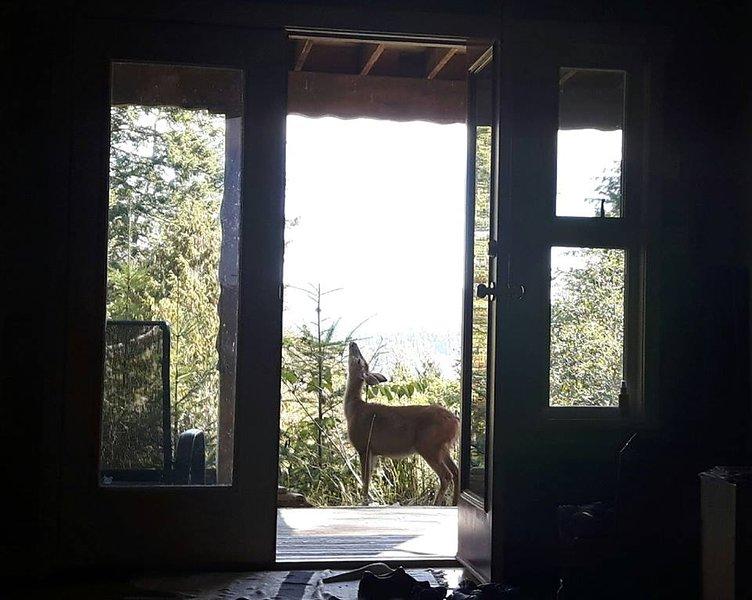 ciervos en la puerta