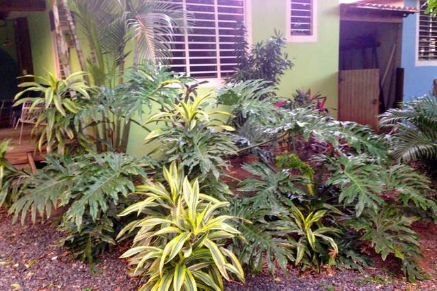 jardines tropicales.