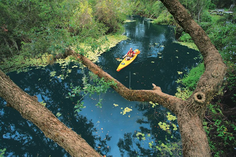 Kayaking through the mangroves and enjoying nature's beauty.