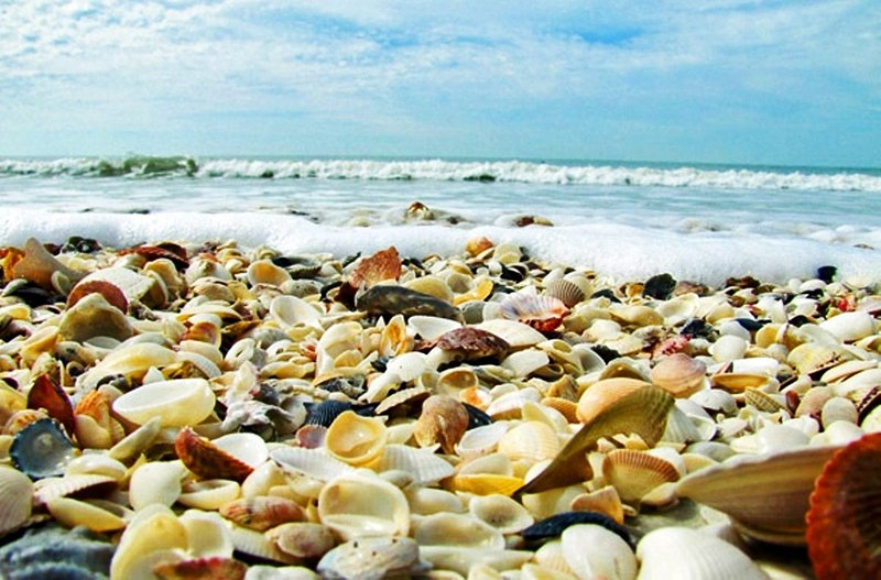 It's not to hard to find great shells on Sanibel's many miles of pristine beaches.