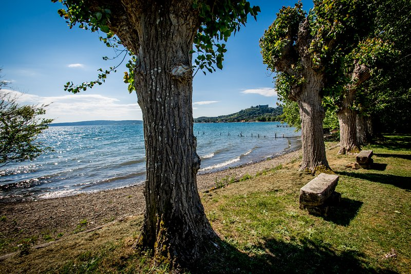 The shore of the lake in front of our garden