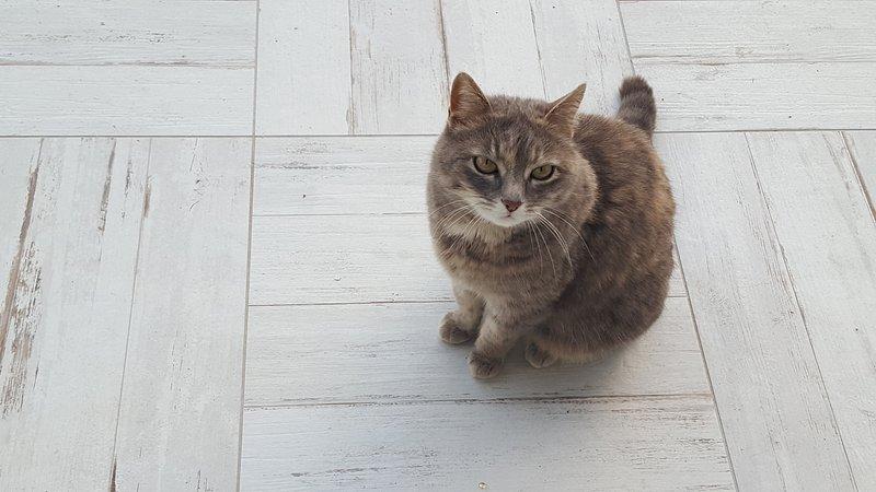 nosso gato