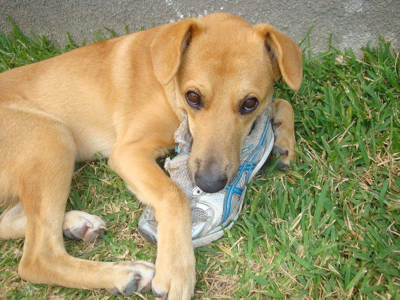No dejar los zapatos fuera del lado de la puerta hay un ladrón en el patio!