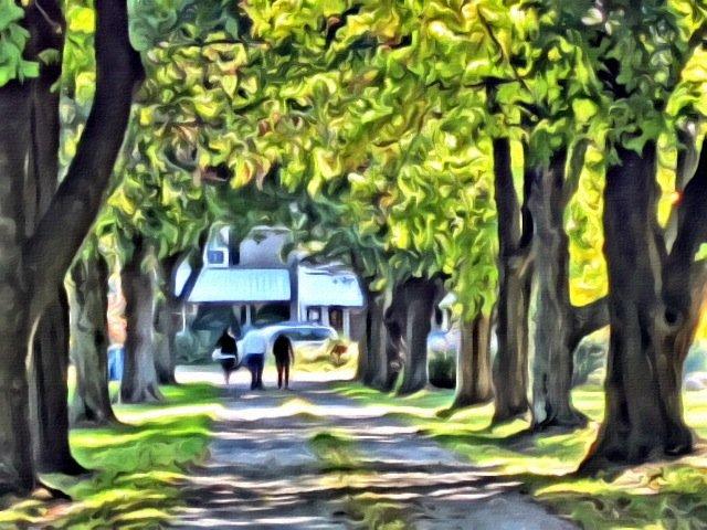 route bordée d'arbres