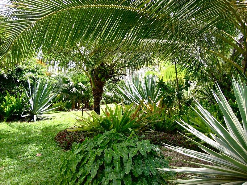 Idyllic corner of the Beach Gardens.