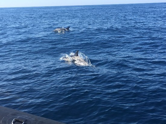 Dolphin Safaris - Portimao -10 minutos en coche