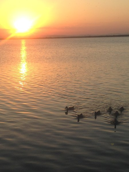 Sunset in the Albufera Natural Park with family of ducks