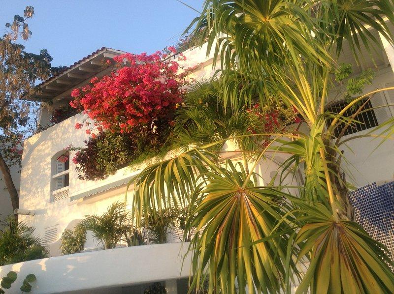 Casa con bouganville in piena fioritura