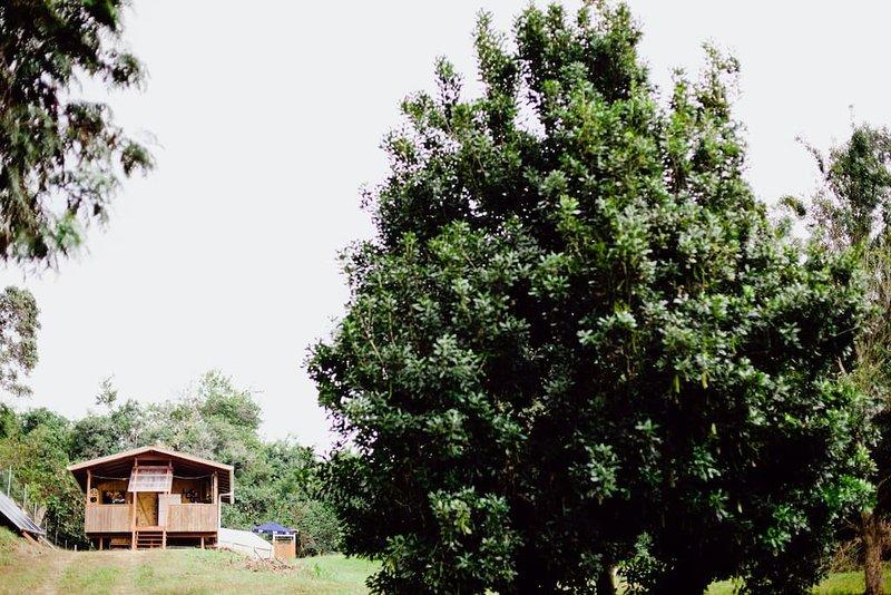 tittar upp mot hytten med en macnut träd till höger (före målning)