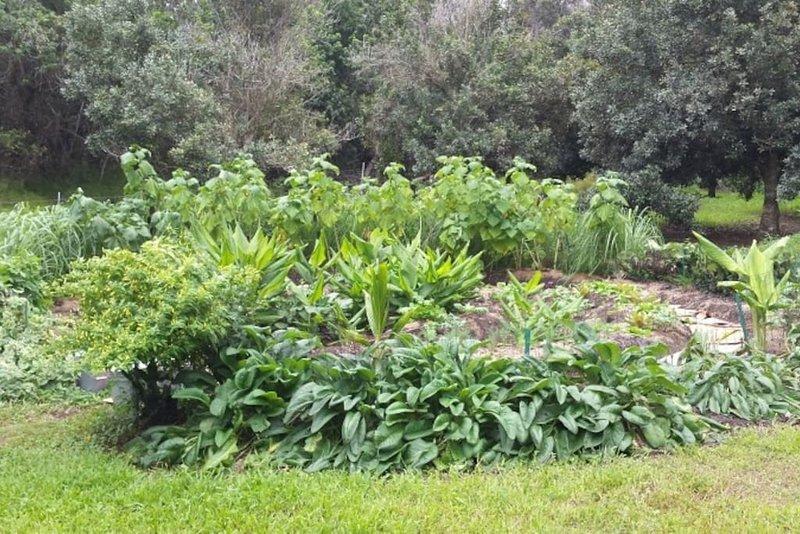 gudinna trädgård på gården