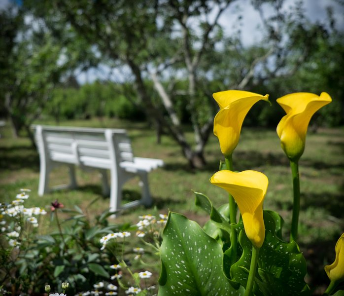 Jardín de la huerta de frutales