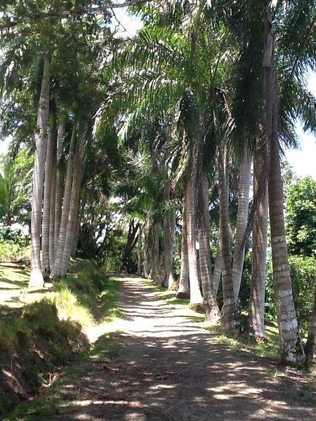 Bienvenido a Royal Palm Villas! Camino de entrada a través de la propiedad