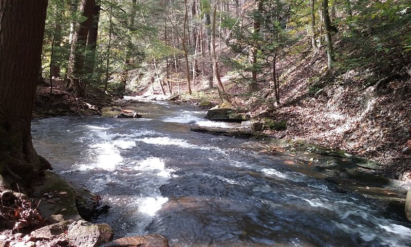 McCullen Run Stream
