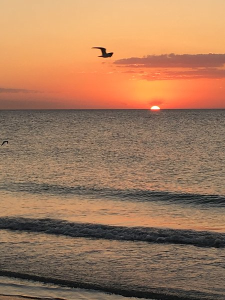 Sunset 2016 Indian Rocks Beach