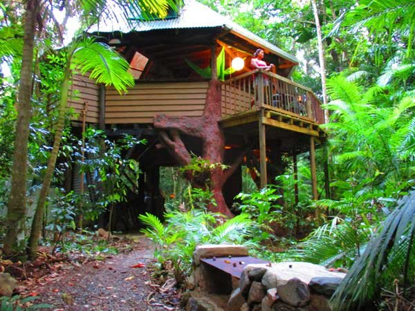 Rearview of the jungle treehouse