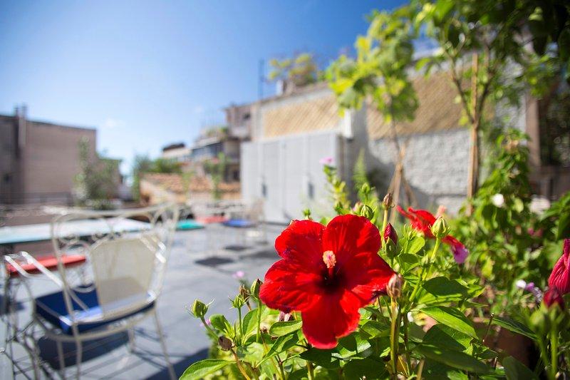 Green roof top terrace