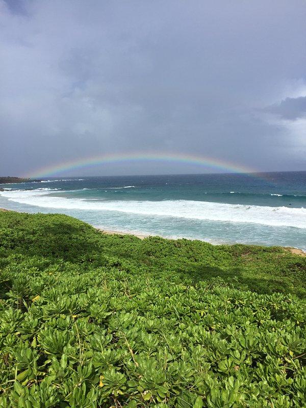 Rainbows sont partout