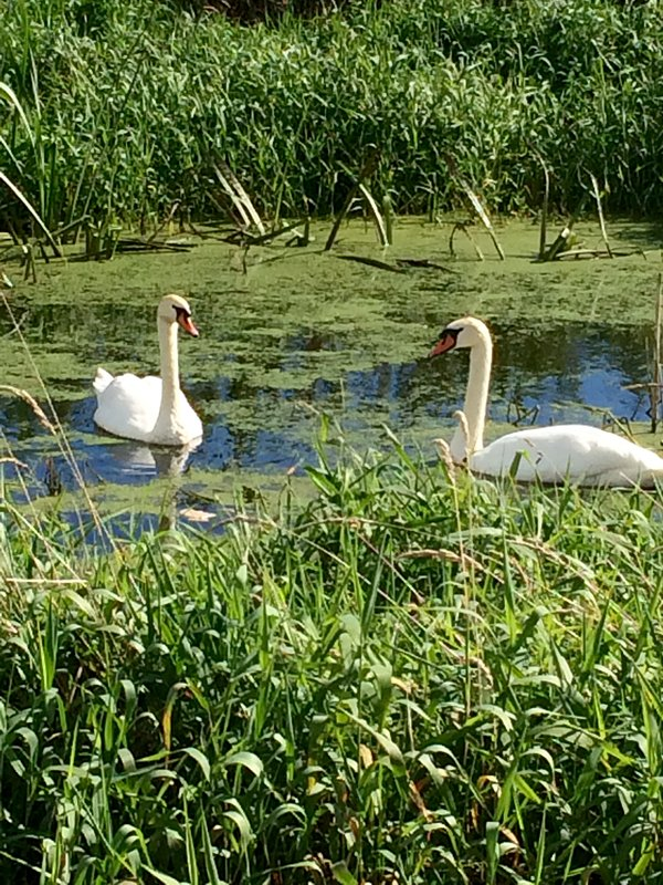 Scarva Canal walk,