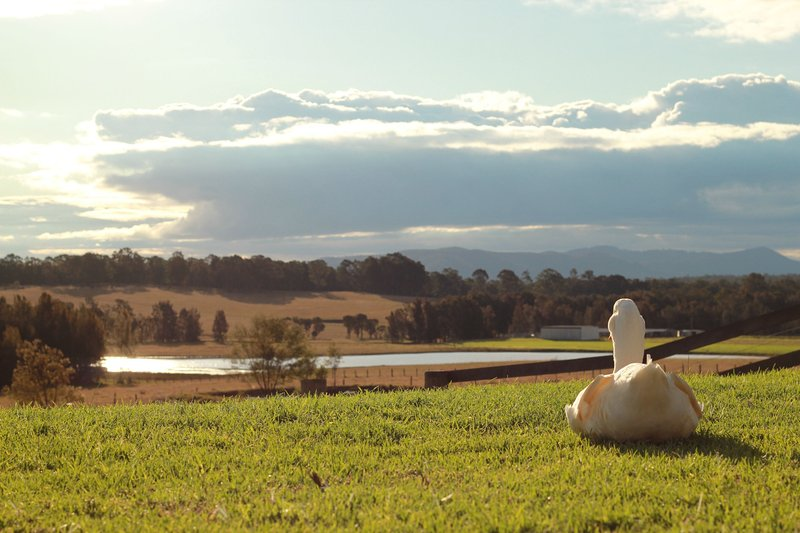 'Edenview' - spacious house on 5 scenic acres in the Hunter Valley NSW, holiday rental in Quorrobolong