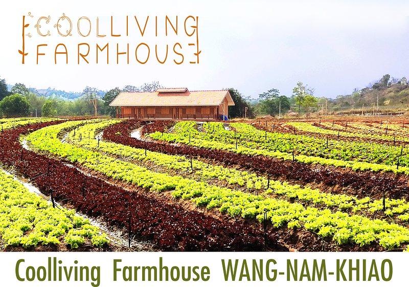 We are organic salad farm, Green, red oak, cos, no pesticides nor hormone, nor chemical fertilizers.