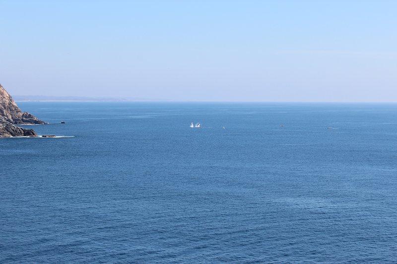 Les baleines sautent juste en face des Villas
