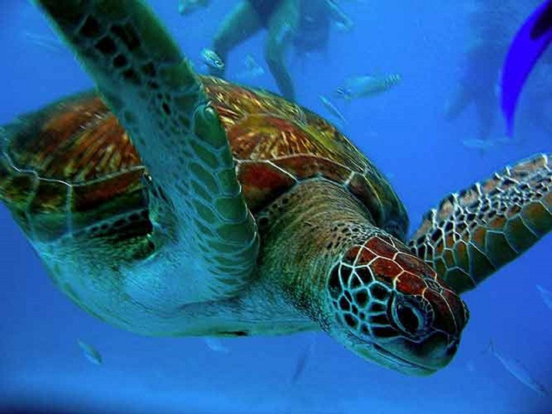 Sea Turtles in our beaches!!