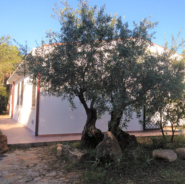 Villa entrance with ancient olive tree