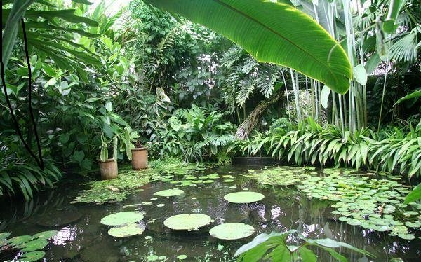 Explore easily Botanical Garden is 20 minutes by taxi from the apartment ....