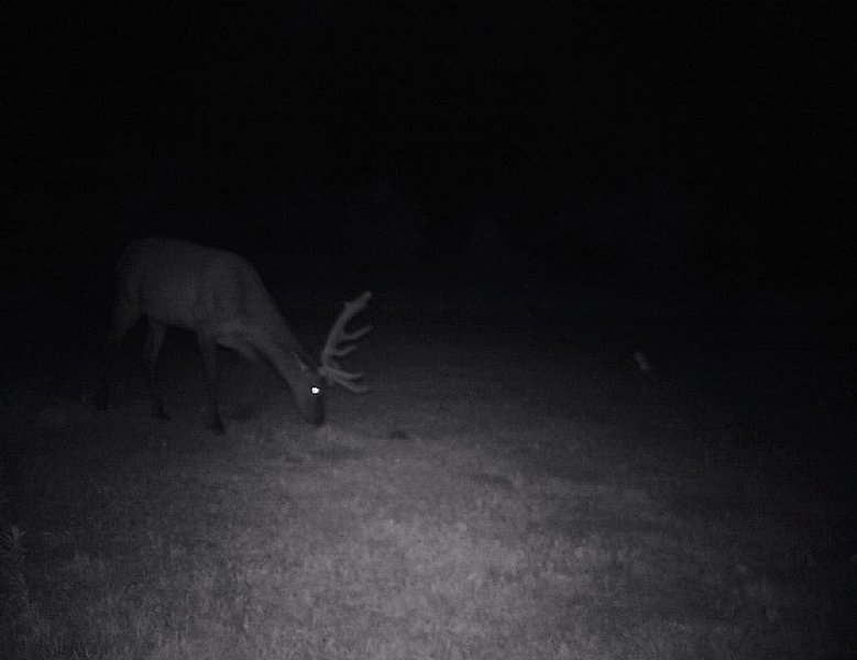 We have many guests that enjoy foraging in our lower meadow day and night.
