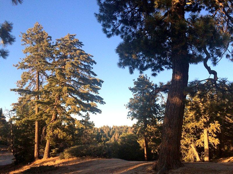 pins pittoresques pour une excellente randonnée
