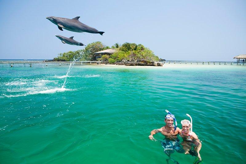 Mientras en Roatán vea los delfines