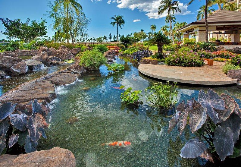 Relaxing Koi Pond