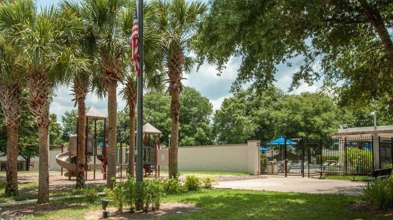 Palm Tree,Tree,Playground,Vegetation,Field