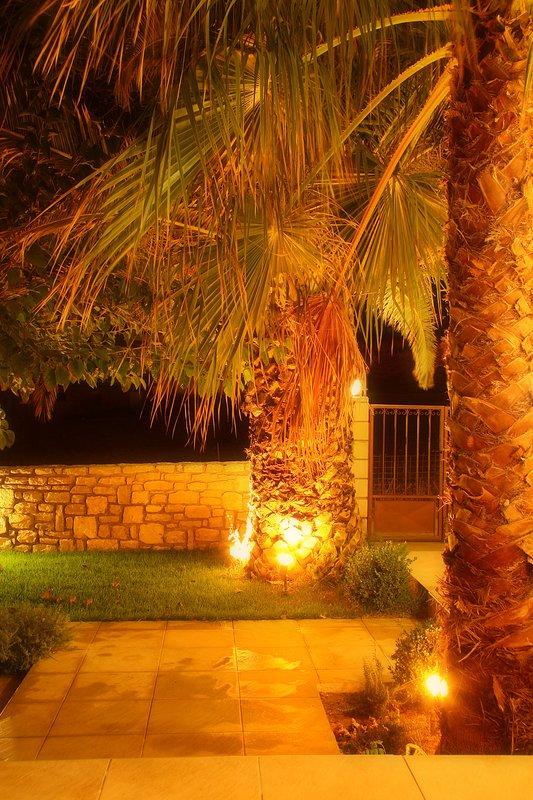 Night shot of the garden