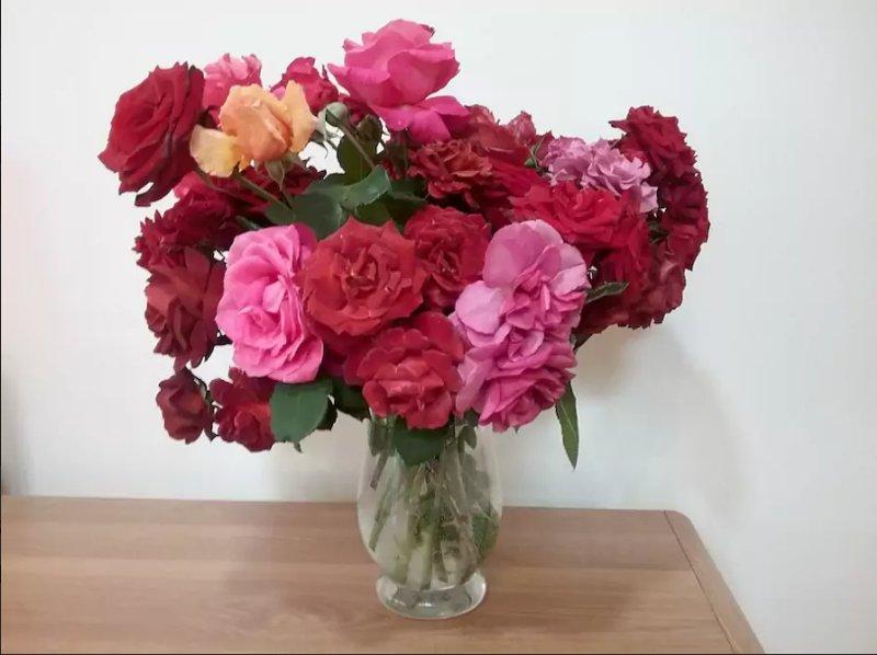 Localement roses cultivées décorer toutes les pièces principales en ajoutant le parfum et la couleur.