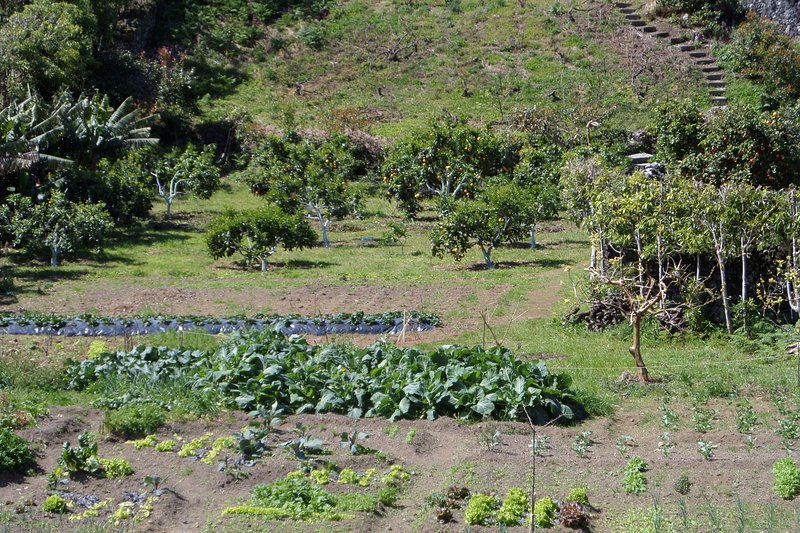 garden with vegetables and fruit trees