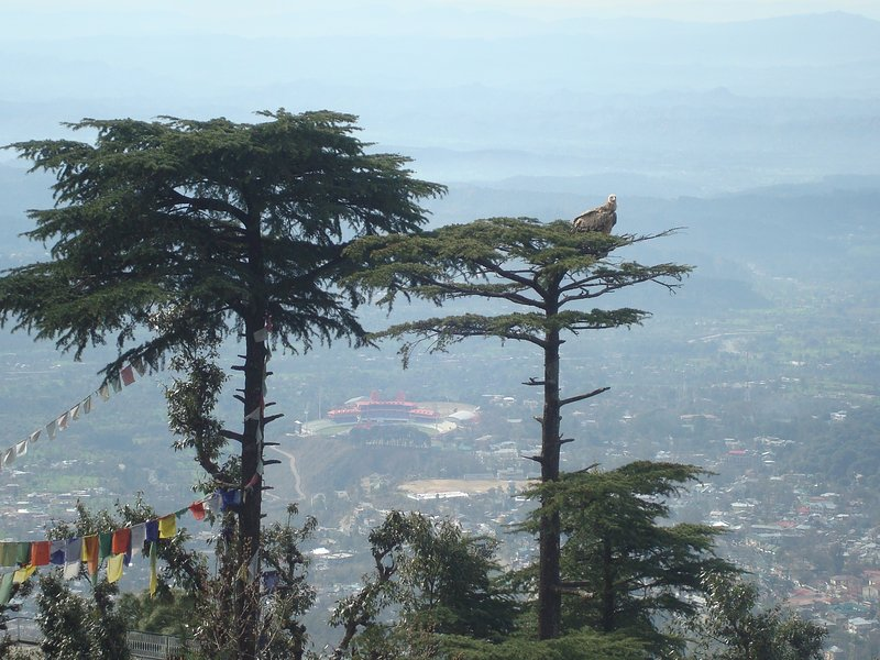 Dharamsala Cricket Stadium can be seen between the trees