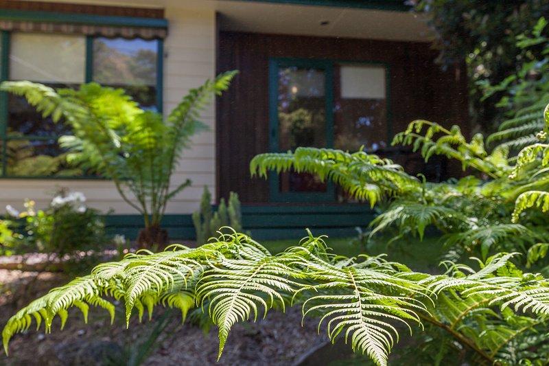 Belles fougères arborescentes établies ornent le grand jardin.