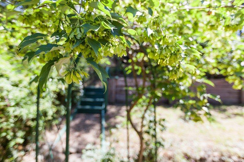 Un arbre, chemin d'accès et mesures que vous prenez à des niveaux plus élevés du jardin.